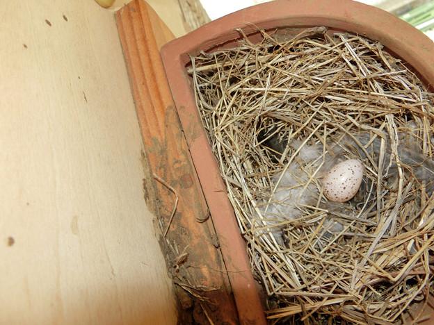 写真: 祝!産卵