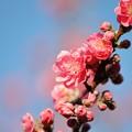 Photos: 【保木の桃畑】5