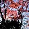 【新宿御苑の紅葉】5