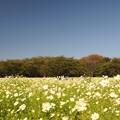 【昭和記念公園:イエローガーデン】1