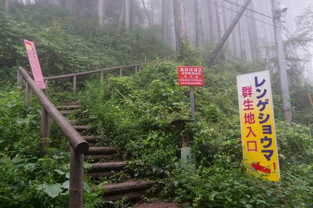 【御岳山・群生地入口】