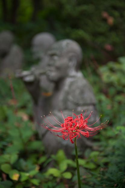 【浄慶寺の彼岸花】4