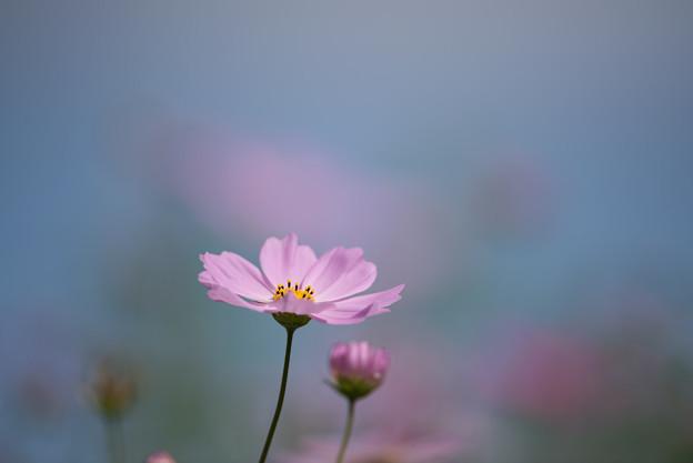 【昭和記念公園(花の丘「ピックアップ」】3