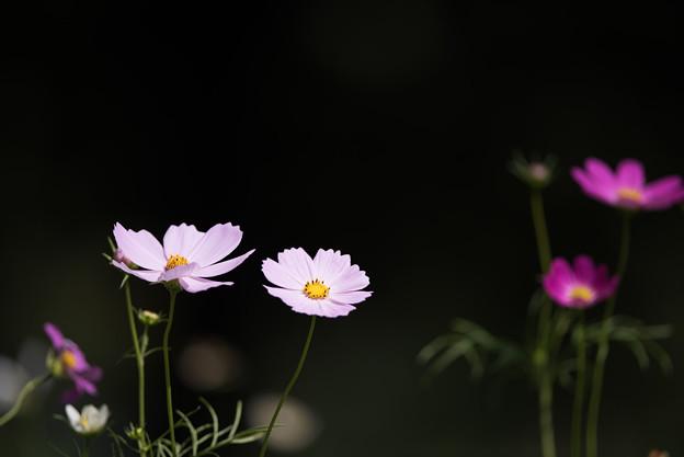 【昭和記念公園(花の丘「望遠で」】5