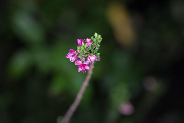 【庭の花(不明)】