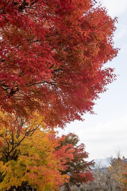 【紅葉(河口湖)】3