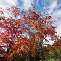 【昭和記念公園(日本庭園の紅葉)】3