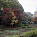 【薬師池公園(全景)】2