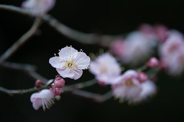 【大船植物園(道知辺)】4