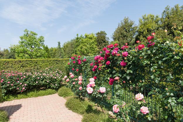 【花菜ガーデンの眺め】08
