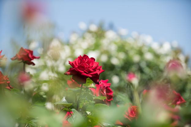 【花菜ガーデン(熱情)】1