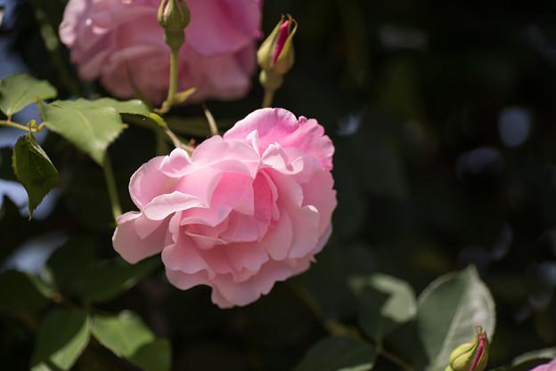 【花菜ガーデン(スパニッシュビューティ)】3