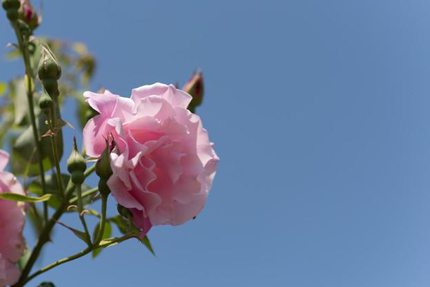 【花菜ガーデン(スパニッシュビューティ)】4