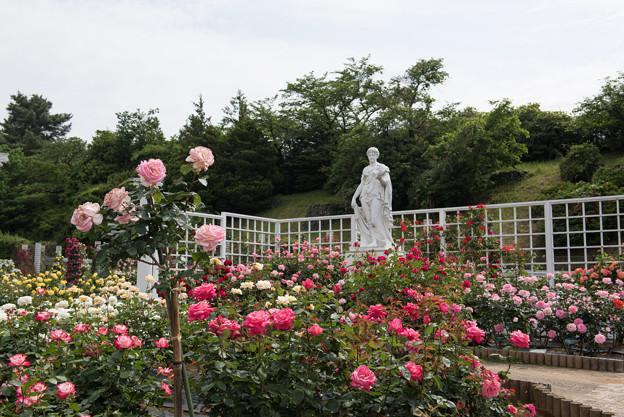 【生田緑地ばら苑の眺め】10