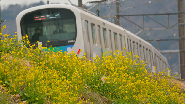 写真: 西武線花飾り