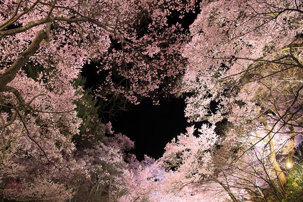 7高遠の桜D5(16.4.8-9) 099