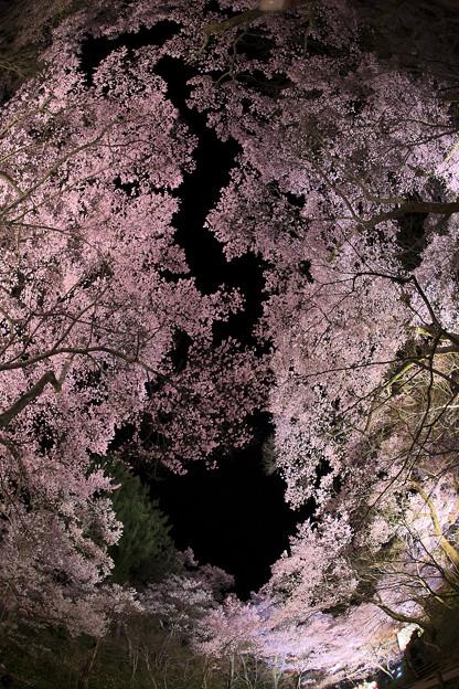 8高遠の桜D5(16.4.8-9) 096