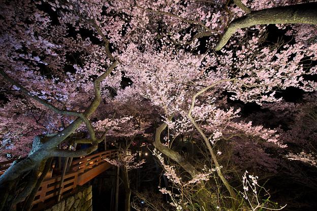 11高遠の桜D5(16.4.8-9) 130