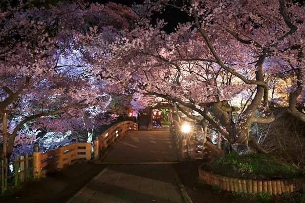 15高遠の桜D5(16.4.8-9) 223