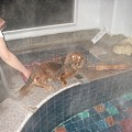 Photos: 犬用 露天風呂