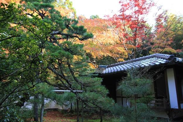 IMG_4653大徳寺・高桐院