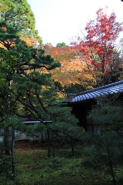 IMG_4654大徳寺・高桐院