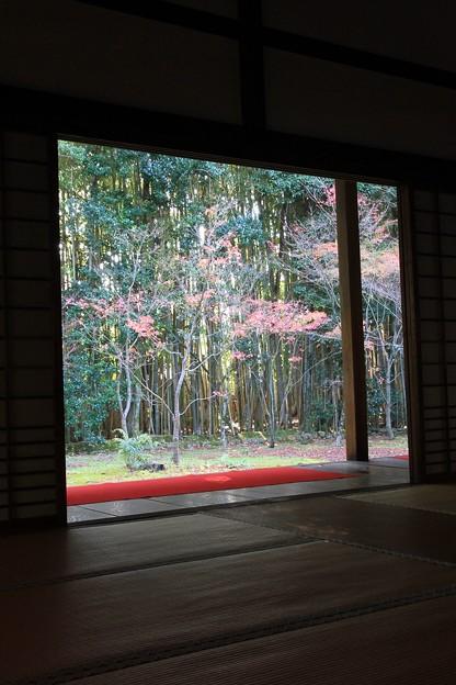 IMG_4695大徳寺・高桐院・額縁風