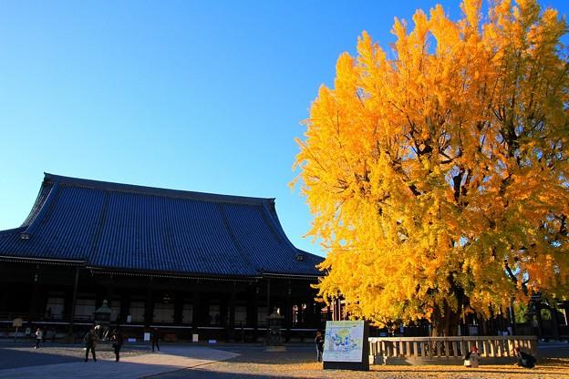 IMG_4796銀杏と阿弥陀堂(本堂)(国宝)