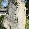 写真: IMG_7531松尾大社