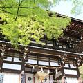 写真: IMG_7537松尾大社・楼門と新緑