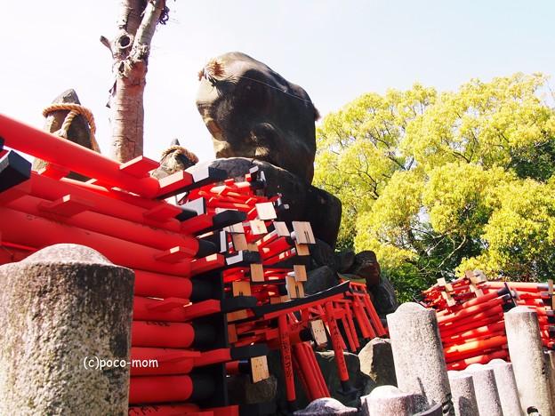京都伏見稲荷2014年05月04日_P5040769