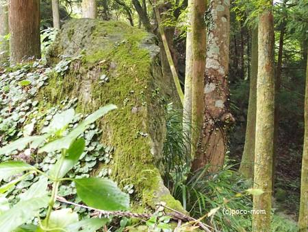 雷山雷神社 白蛇石と磐座 PA120409