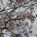 Photos: 上野 DSC_0880