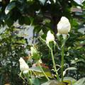 Photos: kansha27071101