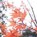 Photos: 大手町の紅葉
