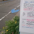 写真: 宮崎市、新たに中心市街地に自転車レーンを整備中1