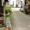 猫のいる街角