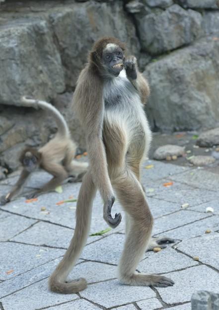 江戸川自然動物園1