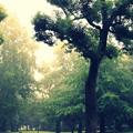 Photos: こないだの台風@戸山公園