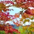 Photos: 2014富士山麓の秋61