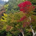 2015富士山麓の秋76