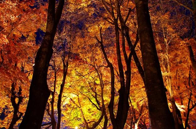 2015富士山麓の秋146