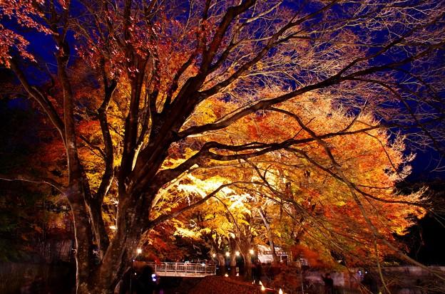 2015富士山麓の秋145