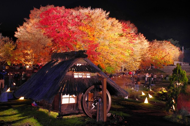 2015富士山麓の秋148