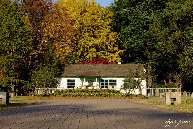Photos: オリンピック記念宿舎  代々木公園