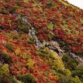 Photos: 火山と紅葉