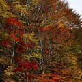 斜面の紅葉