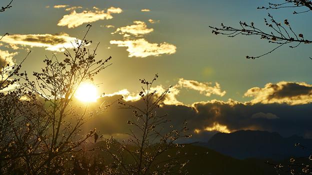 寒桜の咲く丘で