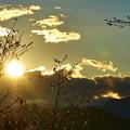 Photos: 寒桜の咲く丘で