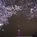 春の夜とスカイツリー